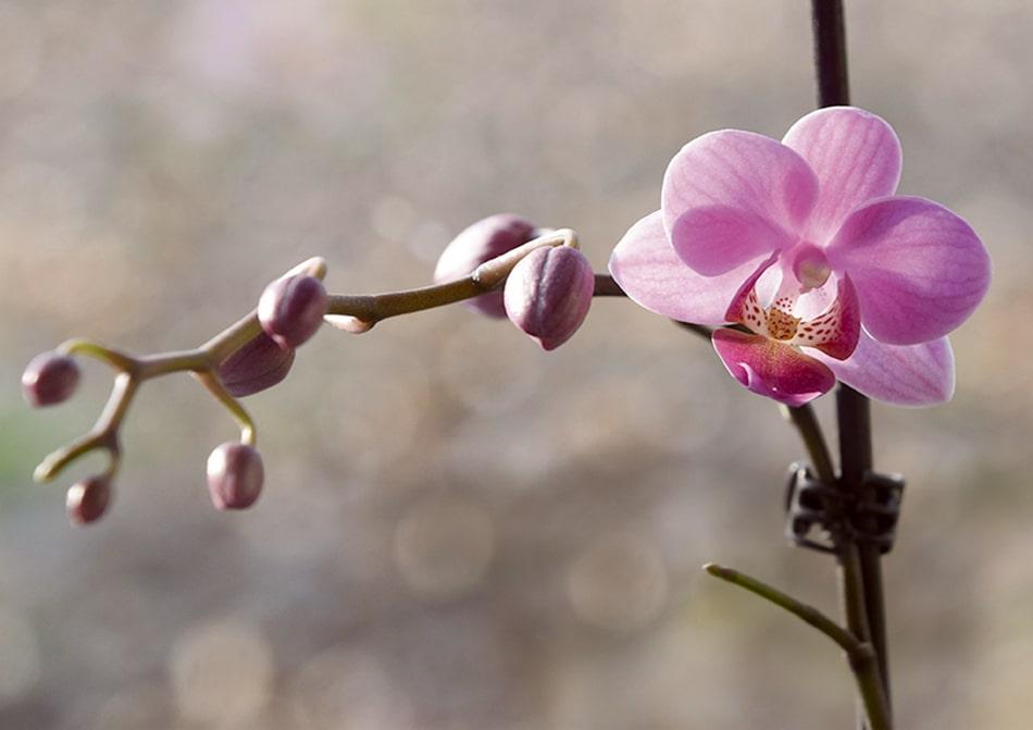 orquideas -min